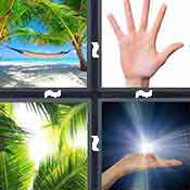 4 pics 1 word answer cheat Palm