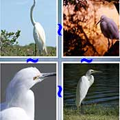 Whats the Word Egret