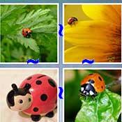 Whats the Word Ladybug
