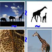Whats the Word Giraffe