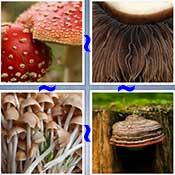 Whats the Word Mushroom