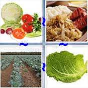 Whats the Word Cabbage