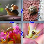 Whats the Word Snail
