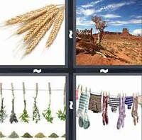 4 Pics 1 Word Dry