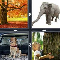 4 Pics 1 Word Trunk