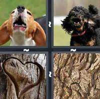 4 Pics 1 Word Bark