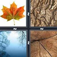 4 Pics 1 Word Tree