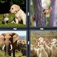 4 Pics 1 Word Animal