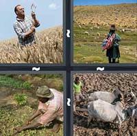 4 Pics 1 Word Levels Farmer