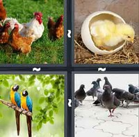 4 Pics 1 Word Levels Bird