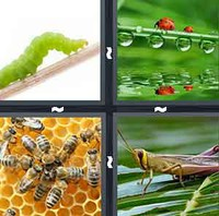4 Pics 1 Word Levels Insect