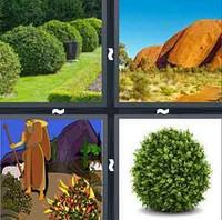 4 Pics 1 Word Levels Bush