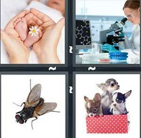 4 Pics 1 Word Tiny