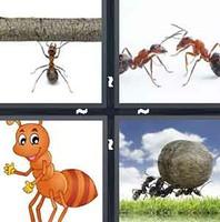 4 Pics 1 Word Ant