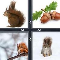 4 Pics 1 Word Squirrel
