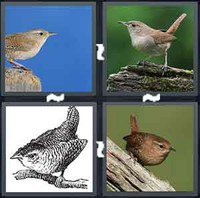 Pics  Word  Letters Birds