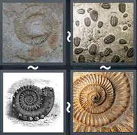 4 Pics 1 Word Levels Fossil