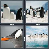 4 Pics 1 Word Levels Penguin