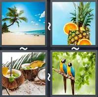 4 Pics 1 Word Tropical