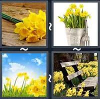 4 Pics 1 Word Daffodil