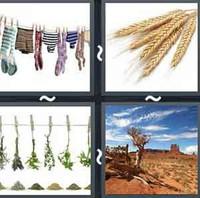 4 Pics 1 Word Levels Dry