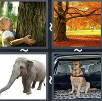 4 Pics 1 Word Levels Trunk
