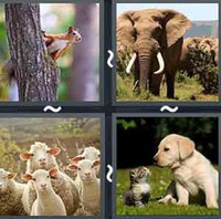4 Pics 1 Word Levels Animal