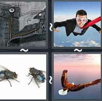 4 Pics 1 Word Fly