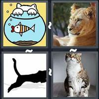 4 Pics 1 Word Levels Feline