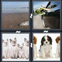 4 Pics 1 Word Litter