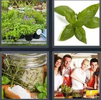 4 Pics 1 Word Herb