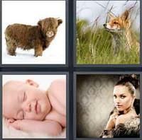 4 Pics 1 Word Fur