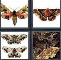 4 Pics 1 Word Moth