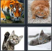 4 Pics 1 Word Levels Cat
