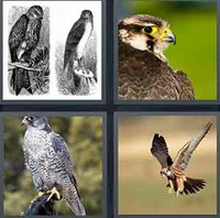 4 Pics 1 Word Levels Falcon