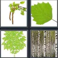 4 Pics 1 Word Levels Birch