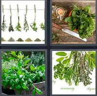 4 Pics 1 Word Levels Herbs