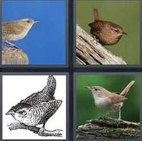 4 Pics 1 Word Levels Wren